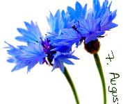 Hochzeitskerzen mit Schrift um Blumen
